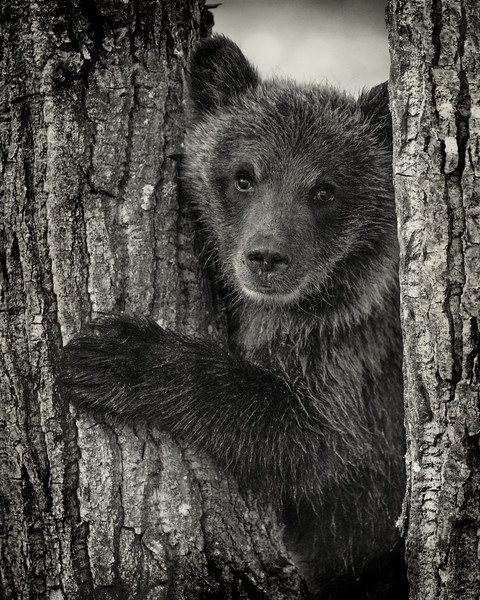 BC-Grizzly-Bears--09280BW.jpg
