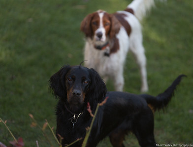 The Family Dogs