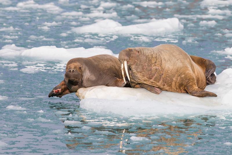 20180812_Svalbard-3556_TimoTammisto.jpg