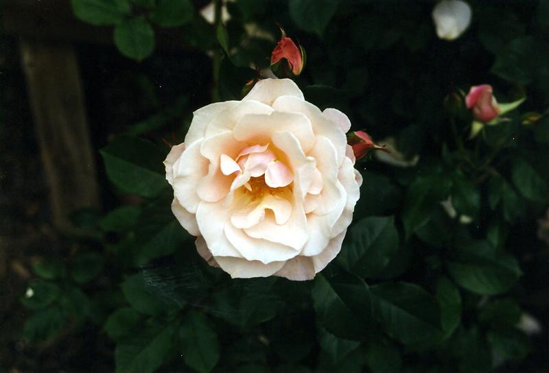1999-013.jpg