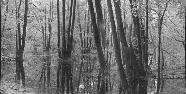Forest Black&White II
