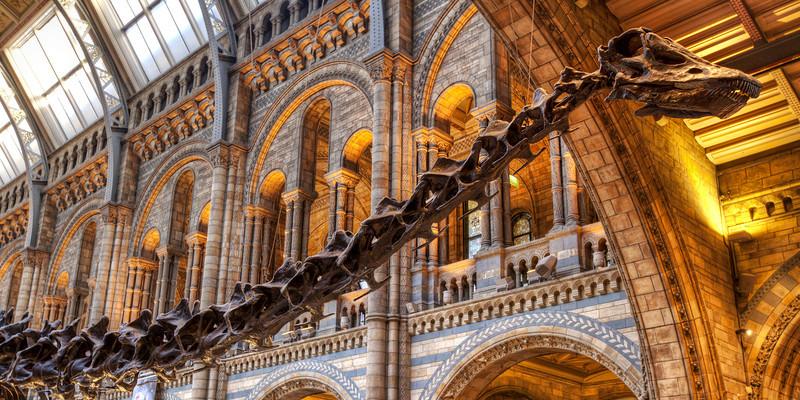 natural-history-museum-dinosaur.jpg