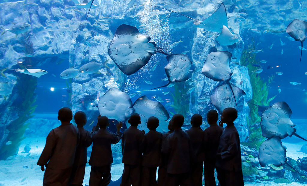 . Shaven-headed children look at rays at the Lotte World Aquarium in Seoul, South Korea, Wednesday, May 11, 2016. Ten children who entered the temple to have an experience of monks\' life for two weeks as a part of program to celebrate Buddha\'s upcoming 2,560th birthday on May 14. (AP Photo/Lee Jin-man)