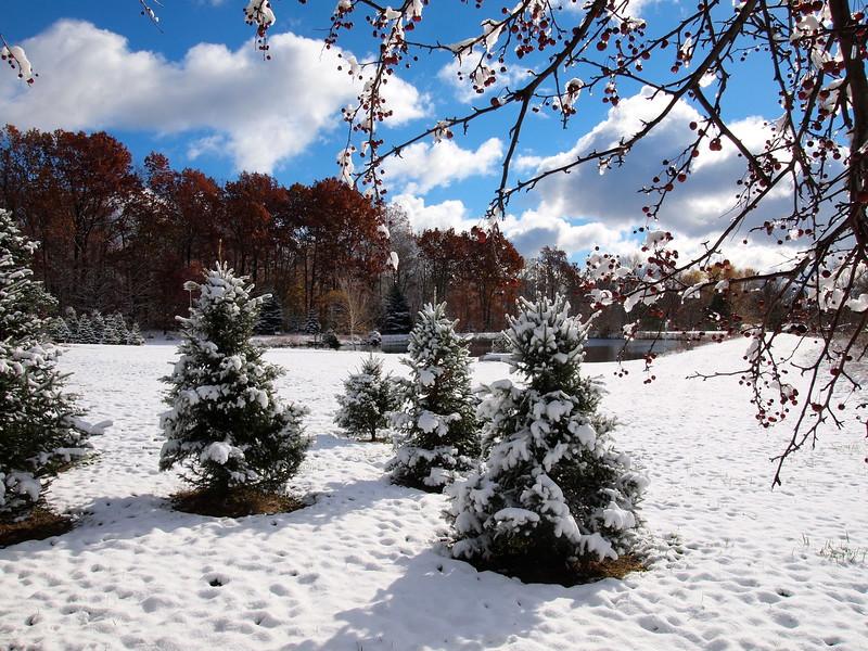 Paradise Hill Christmas Tree Farm, Ohio