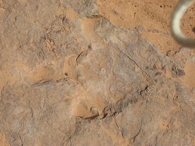 Horseshoe Canyon 5/08