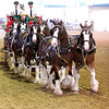 The Busweiser Clydesdales and wagon.