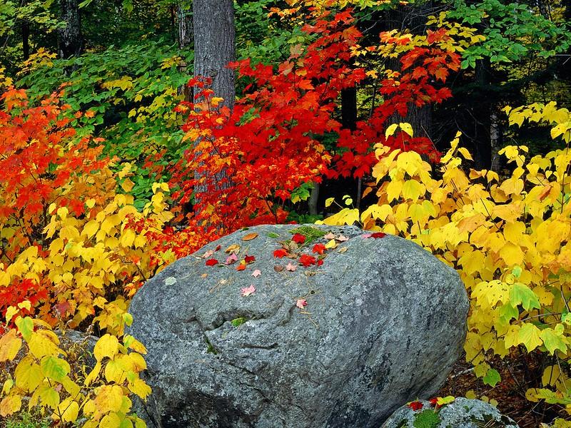 Nature34.jpg