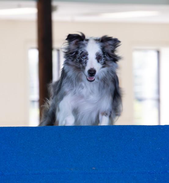 SPCA_Agility-96.jpg