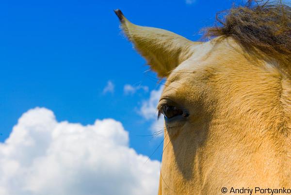 Horses10.jpg