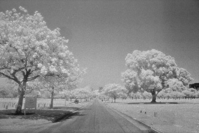 LA National Cemetary in Infrared