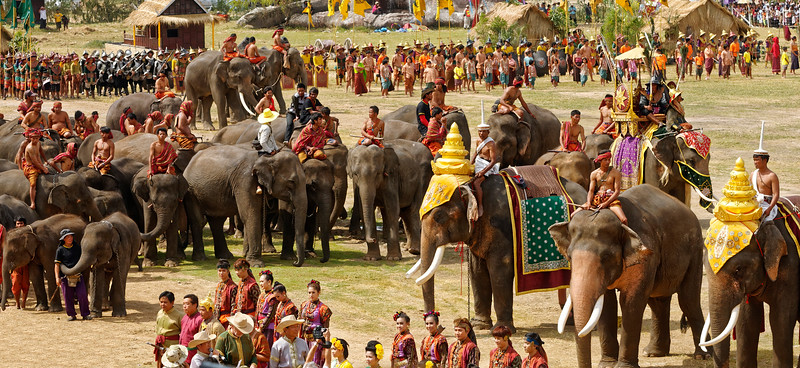 The Surin Elephant Roundup