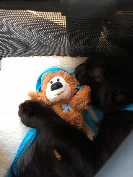 2018-08-22-0001-Cat Carrier-Teddy Bear-Simon.jpg