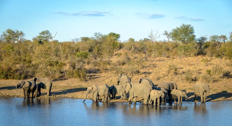 Zuid Afrika 2015 038.jpg