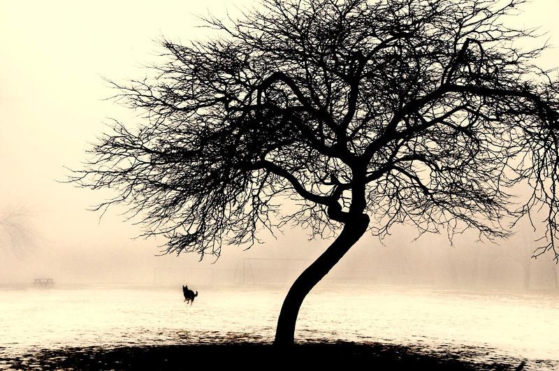 Dog in the winter fog..jpg