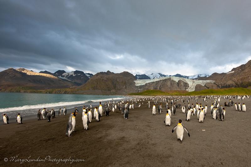 Antarctic-97