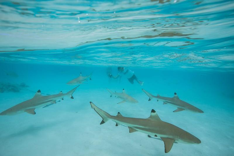 sharks-1-3 copy.jpg