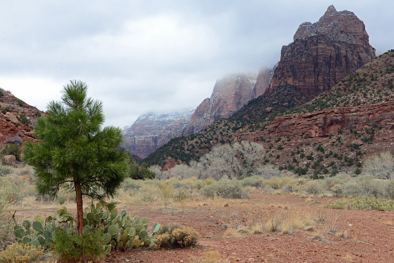 Zion National Park Winter 01.jpg
