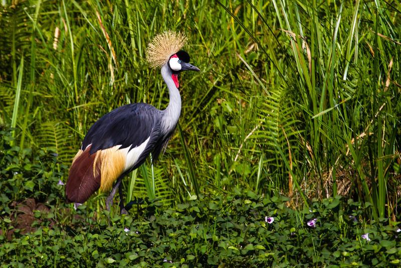 Uganda_GNorton_03-2013-362-2.jpg