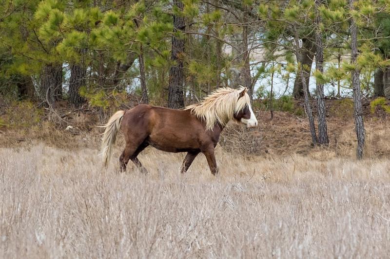 Stallions/Colts
