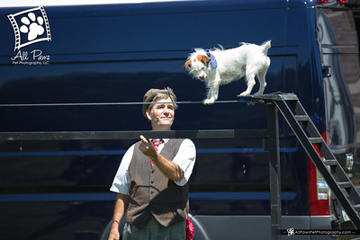 Pet Fest 2014 - Springfield, VA