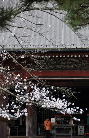 SAKURA SELECTION - March 2013 (31)