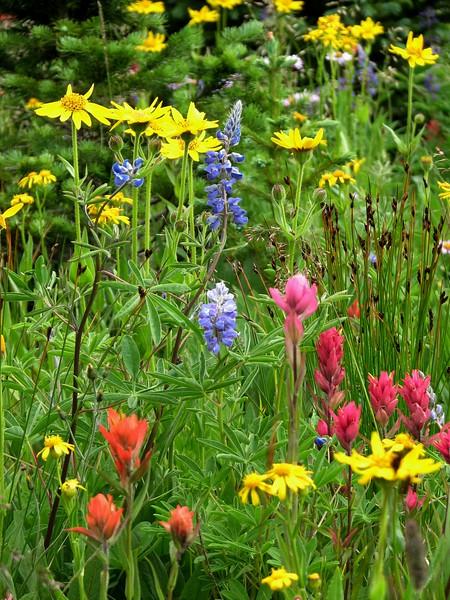 amh FLOWERS (1327).jpg