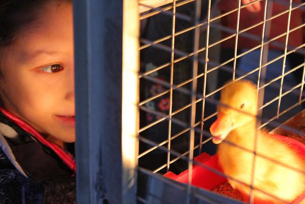 Baby Animals at Billings Farm