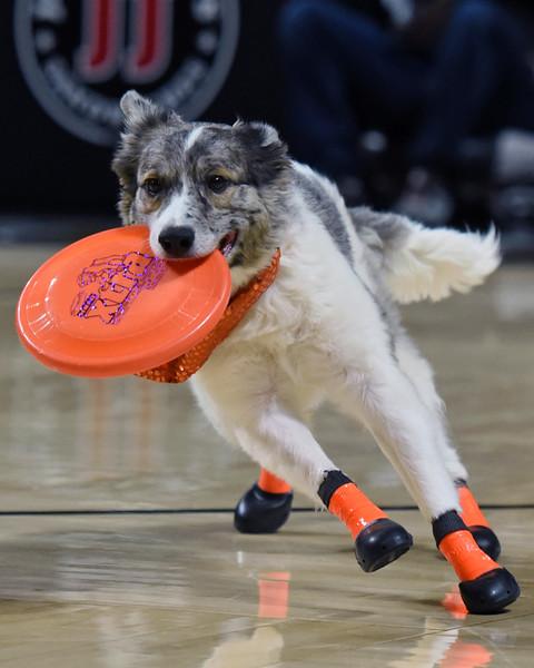 Frisbee dogs 2016-31.jpg