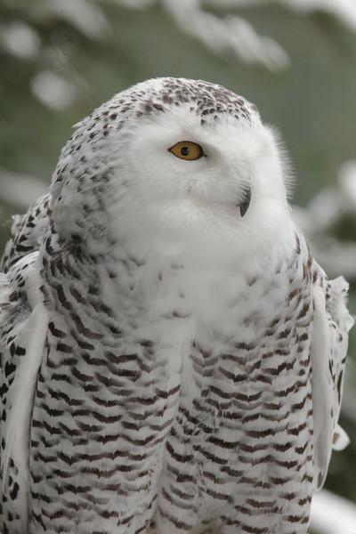 VINS- Winter Wildlife Celebration