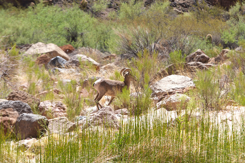 2014_Grand_Canyon_WHDW2_7D 60