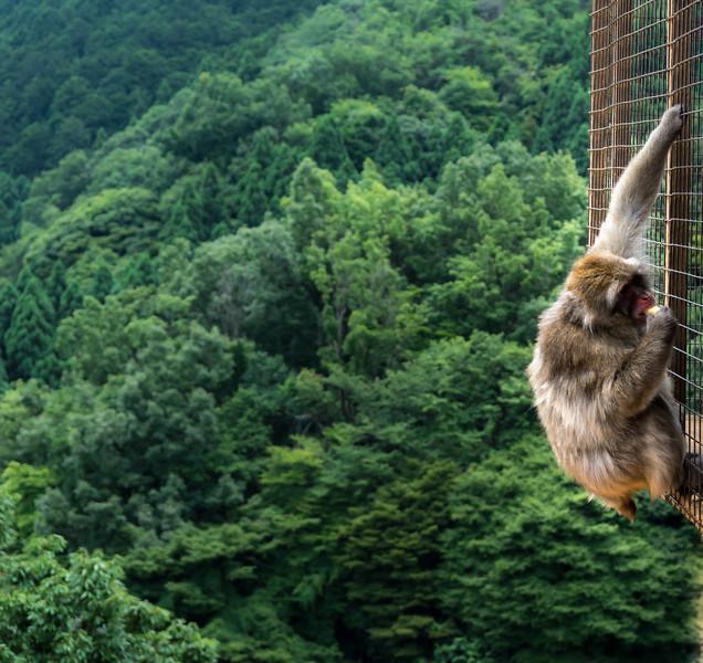 Monkey Mountain, Arashiyama.
