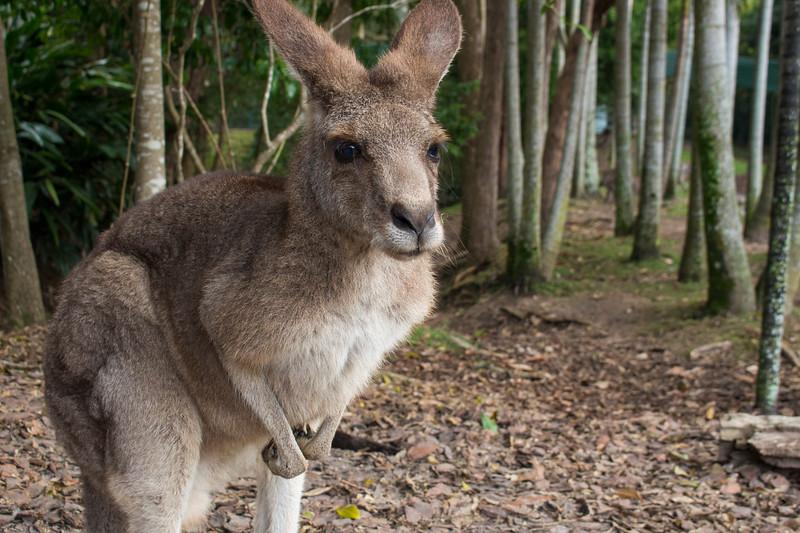 Australia2015_2.jpg