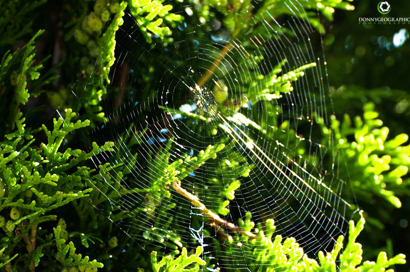 Web in North Vancouver