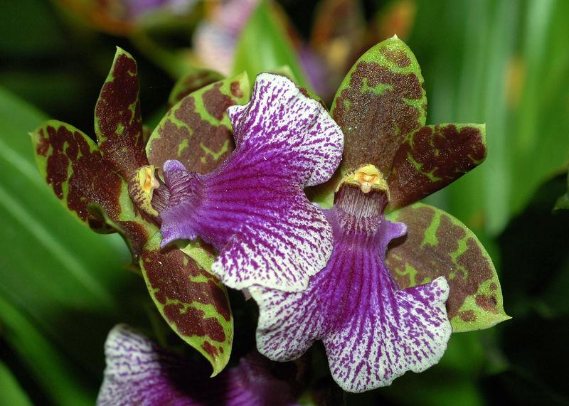 Orquidea 12.jpg