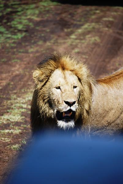 Ngorongoro (110).JPG