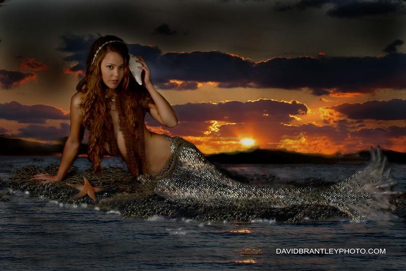 sh mermaid.jpg