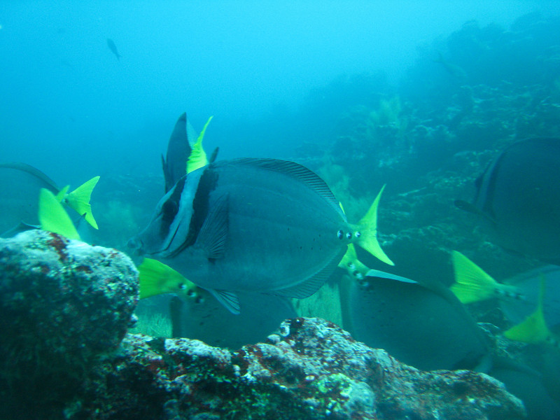 Diving in the Galapagos (30 of 392)