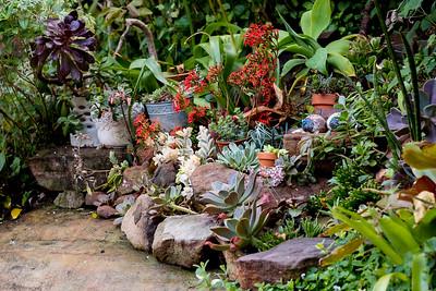Julie's Garden 2017