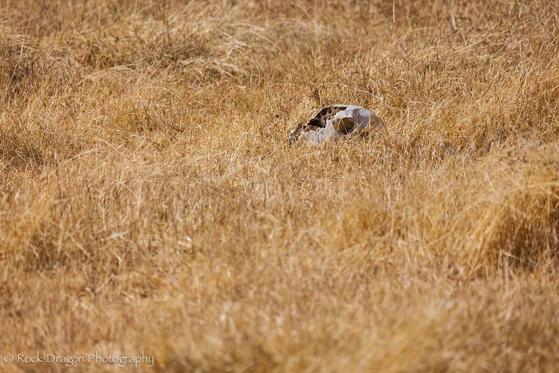 Ngorongoro-18.jpg