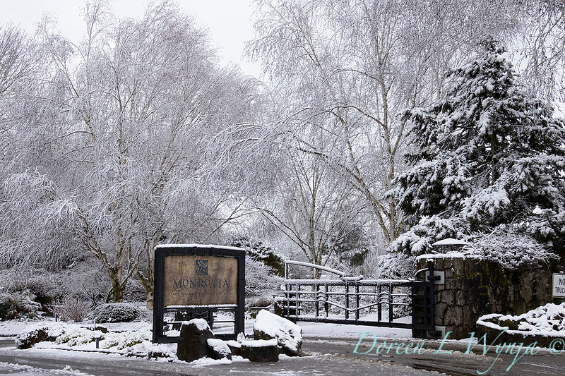 Monrovia front entry in snow_4022.jpg