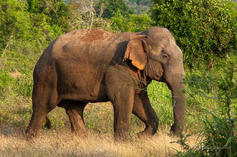 Sri-Lanka-Hurulu-Eco-Park-Elephant.jpg