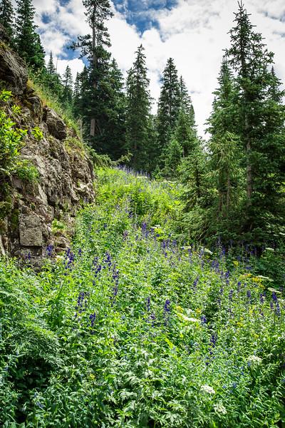 Telluride, Colorado 2016-1426.jpg