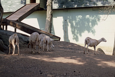 Catskill Game Farm - 1999
