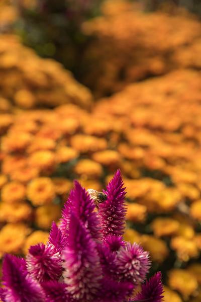 Chicago Botanic Garden 020.jpg