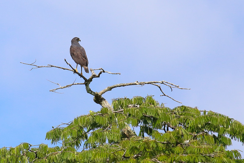 Tahuayo Reserve, Amazon Basin, Peru