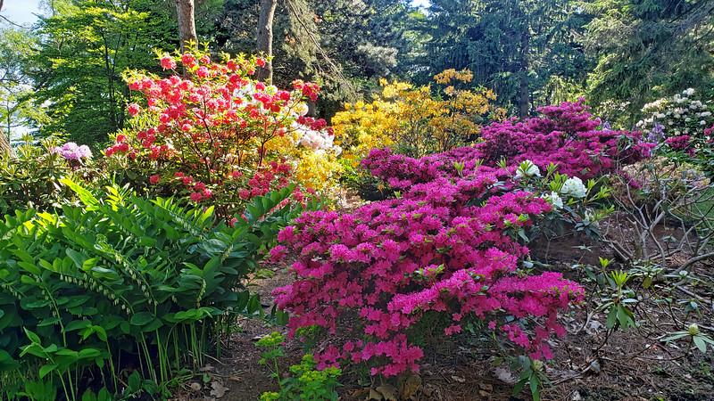 Ontario-Mississauga-PortCredit-RhododendronGarden-04.jpg
