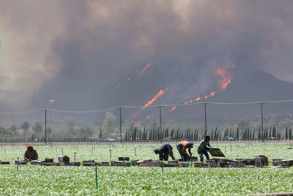 . Farmers keep working as a wildfire on a hill burns in the background in Camarillo, Calif., Thursday, May 2, 2013. (AP Photo/Ringo H.W. Chiu)
