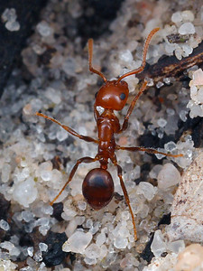 Unplaced ants