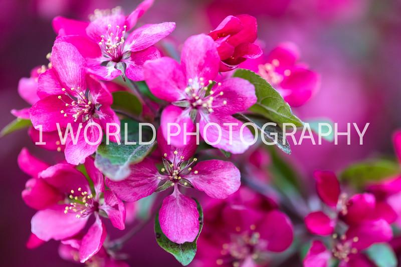 202005152019 Spring_Neighborhood056--40.jpg