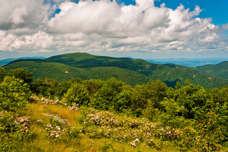 View of Meadow and Appalachian Mountains, Shenandoah National Park, Virginia